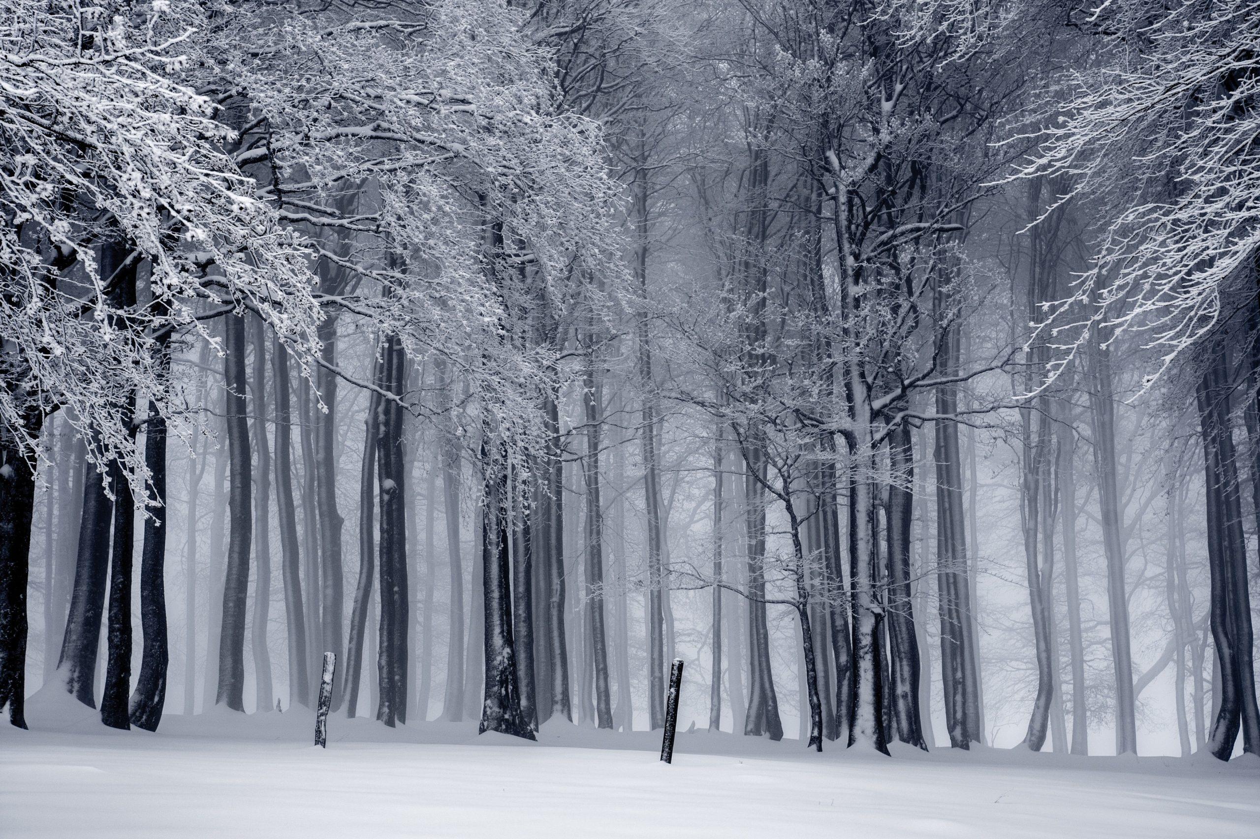 pexels-pixabay-forêt-enneigée