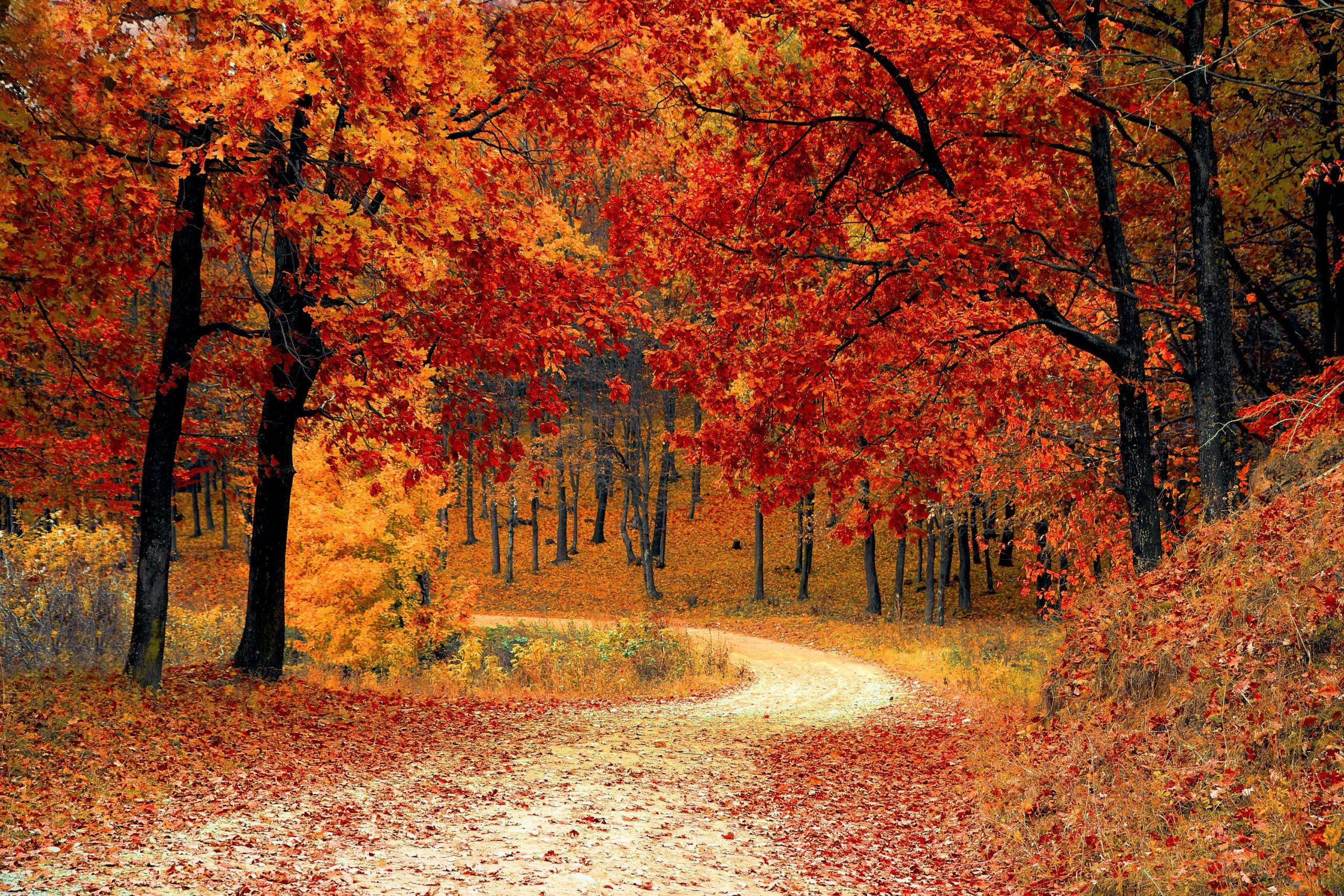 pexels-pixabay-forêt-automne